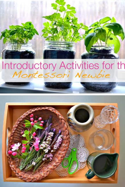 Make Like a Montessori Mama: Part 2 – Plant Activities