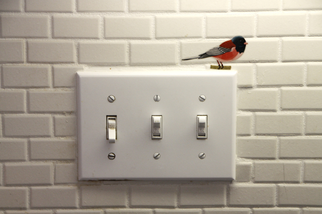 birdwatching8