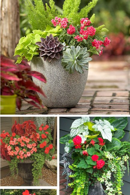 The Secret to Gorgeous Plant Pots (The Forever Home Project)